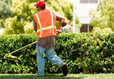 guy landscaping in edmonton