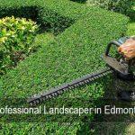Landscape maintenance is important even in winter